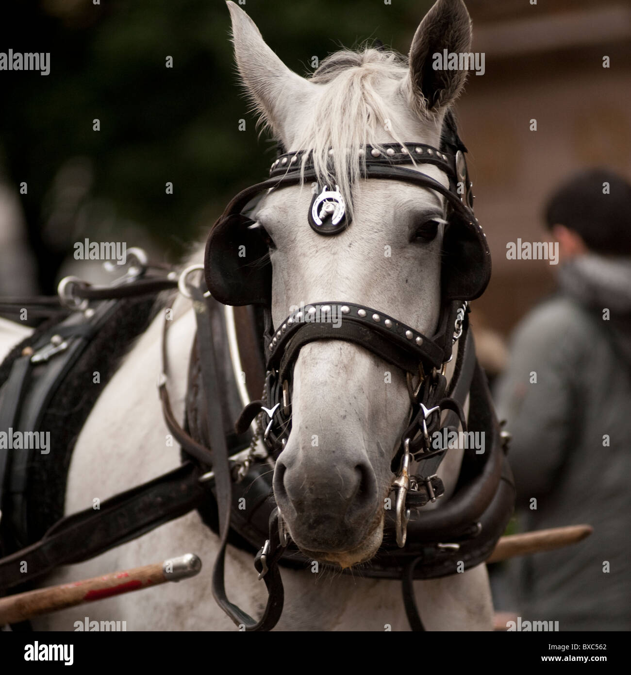 Carriage Horse outside Central Park in Manhattan, New York City, U.S.A. - Stock Image