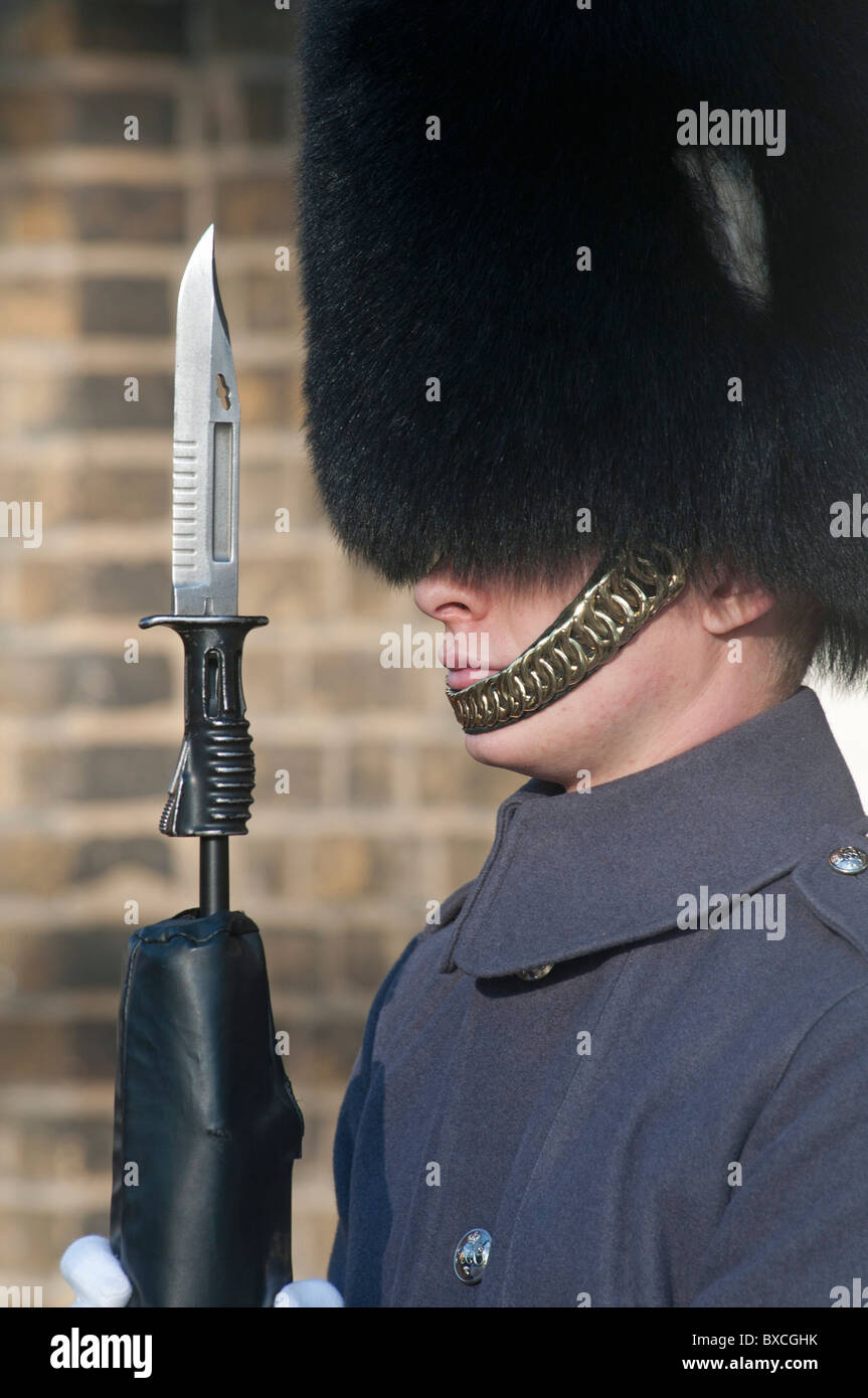 Queens Guard in long grey tunic coat and Busby hat with fixed bayonet standing guard in London, England, UK - Stock Image