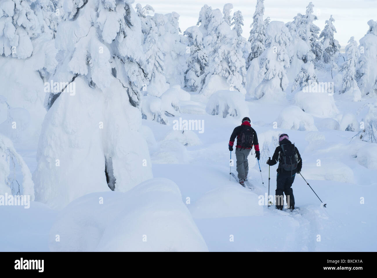 Off-piste skiers opening track among snow-clad trees in Pyhätunturi fell, Finnish Lapland - Stock Image