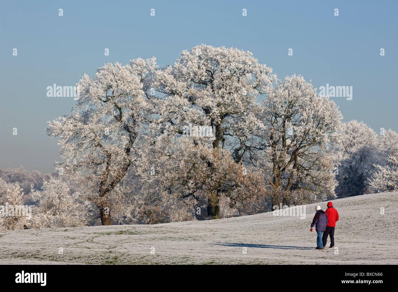 Hoarfrost on trees - United Kingdom - Stock Image