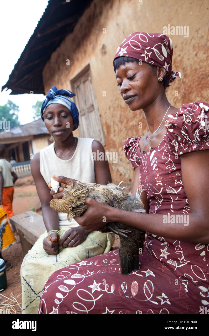 Villagers gather to receive vaccinations for their chickens in Port Loko, Sierra Leone, West Africa. - Stock Image