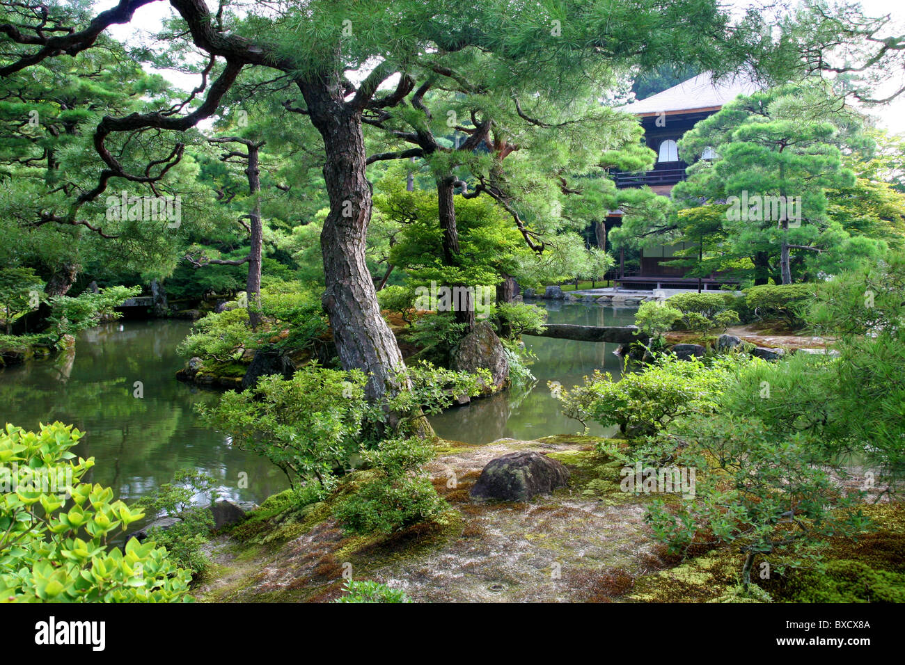Merveilleux Pine Tree Garden In Ginkaku Ji Or Temple Of The Silver Pavilion In Kyoto  Japan