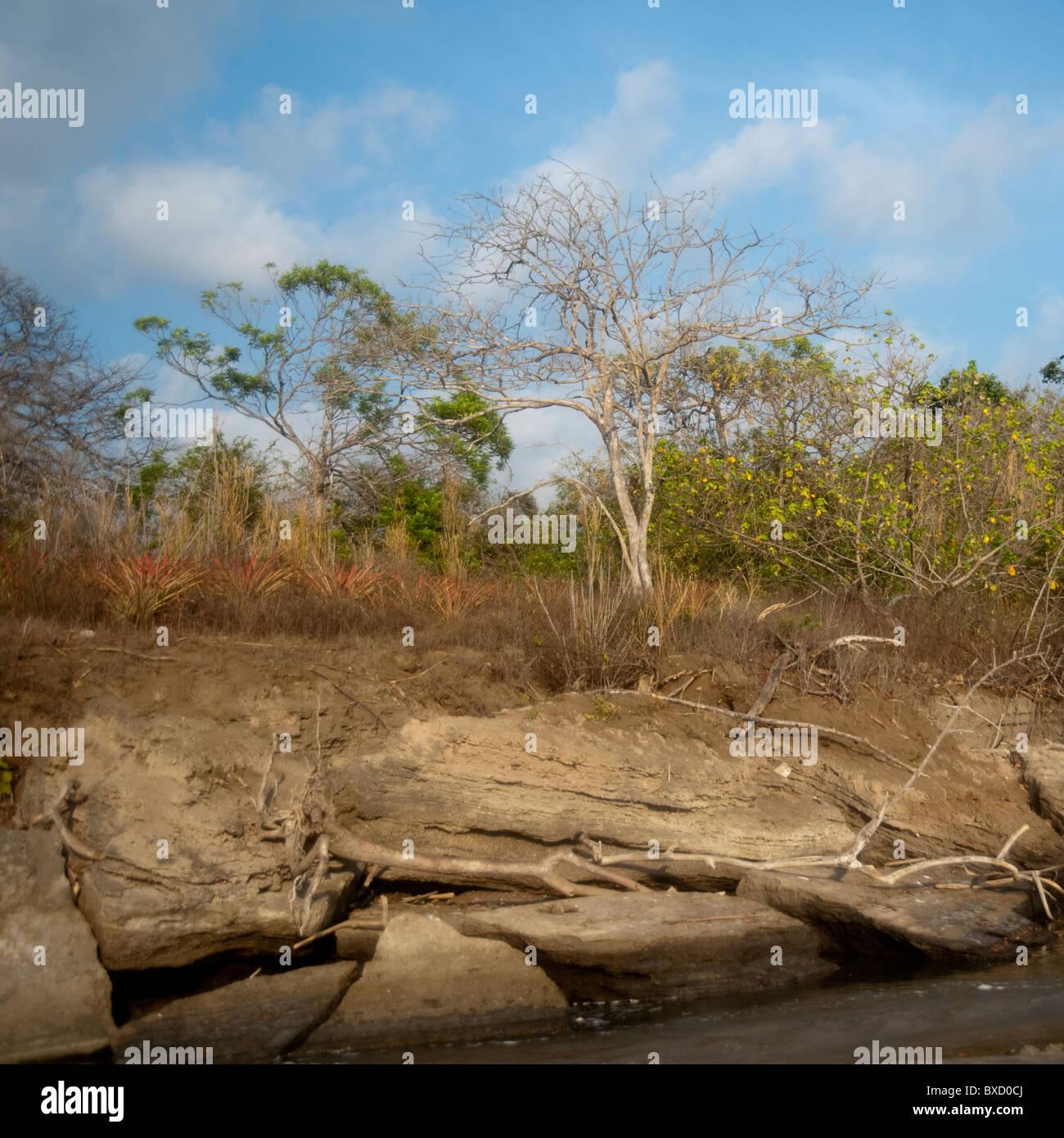 Shoreline in Costa Rica - Stock Image