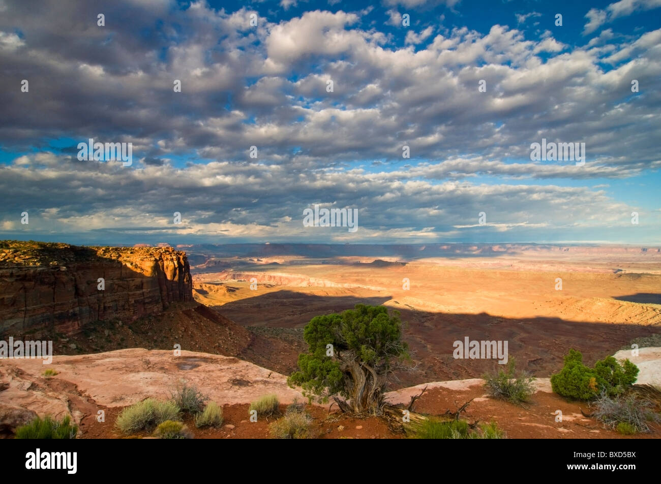Morning light at an overlook in the Island in the Sky district of Canyonlands National Park, Utah. - Stock Image
