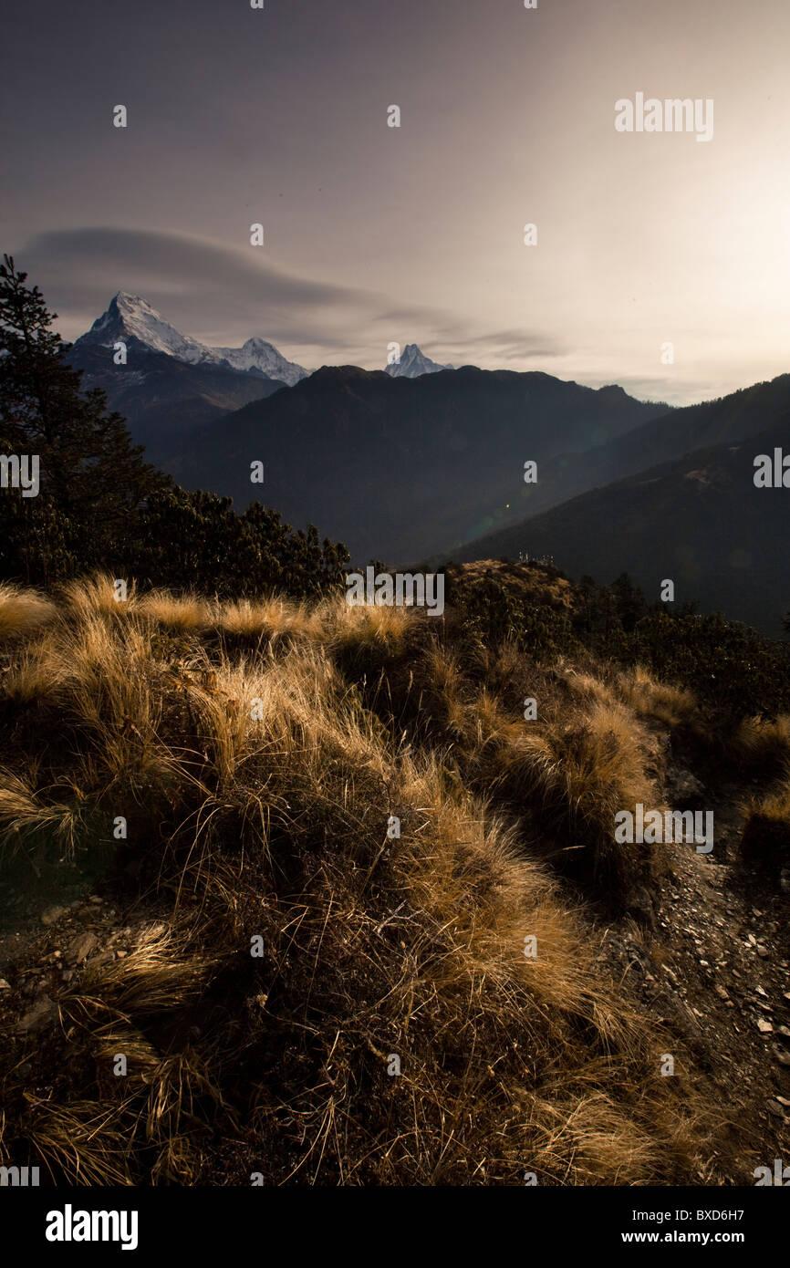 Scrub, high alpine grass and a mountain range in Nepal. - Stock Image
