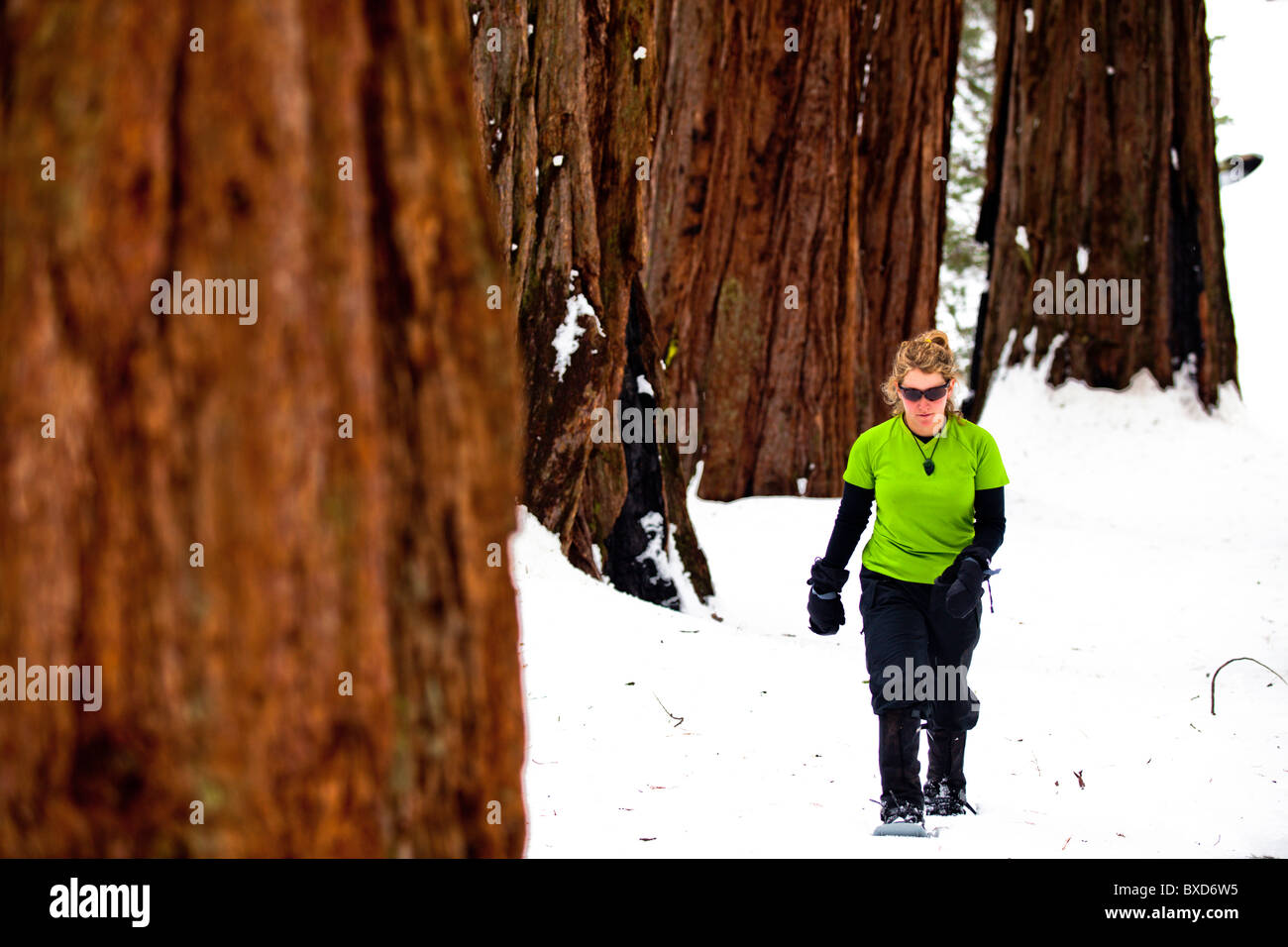 A female hiker snowshoes through Sequoia National Park, California. - Stock Image