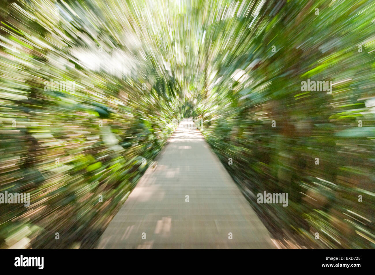 A wooden path through the rainforest in warped speed. - Stock Image