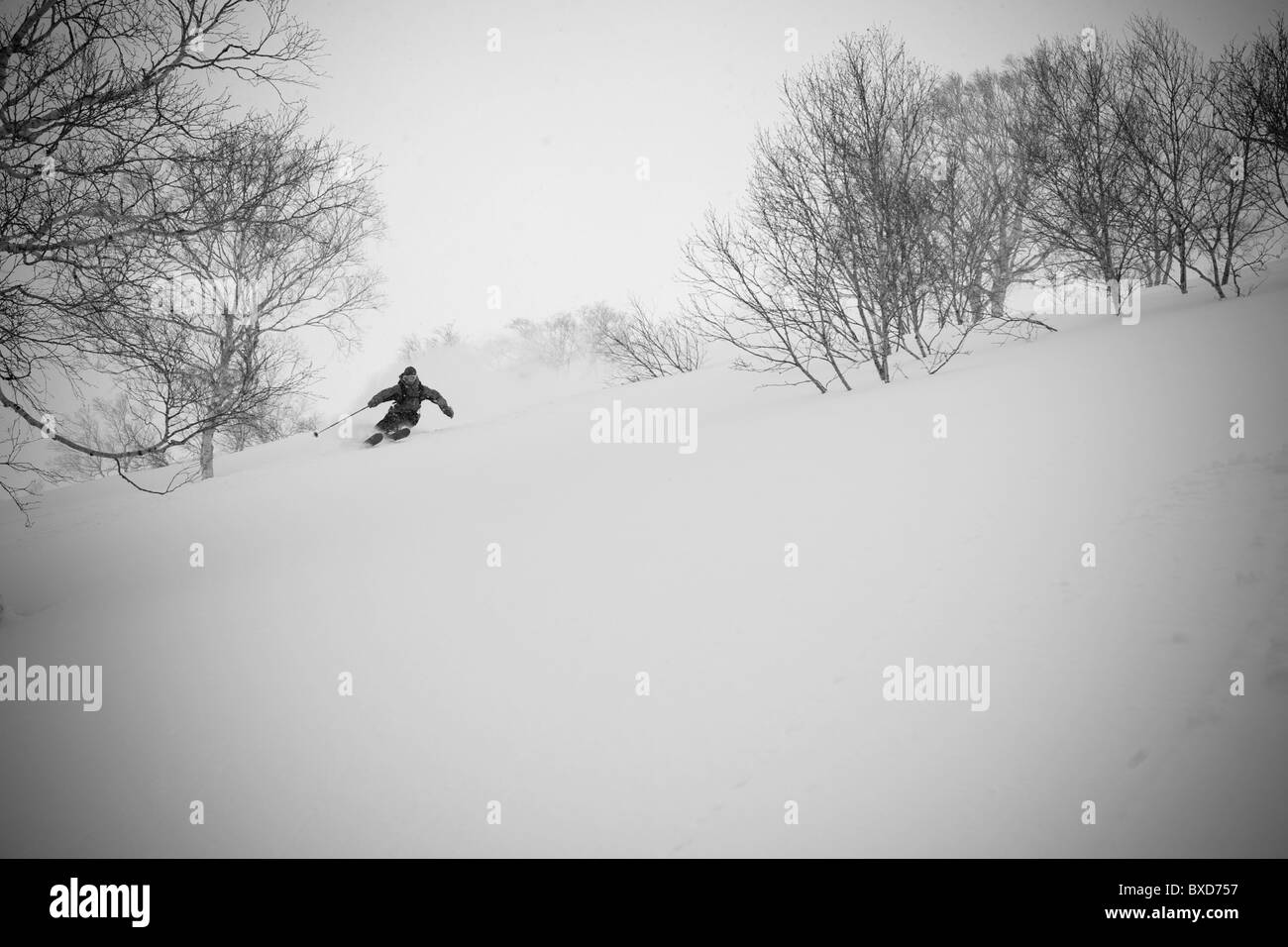 A man weaves his way through some trees in Niseko, Japan - Stock Image
