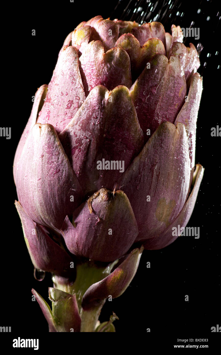 Wet Artichoke - Stock Image