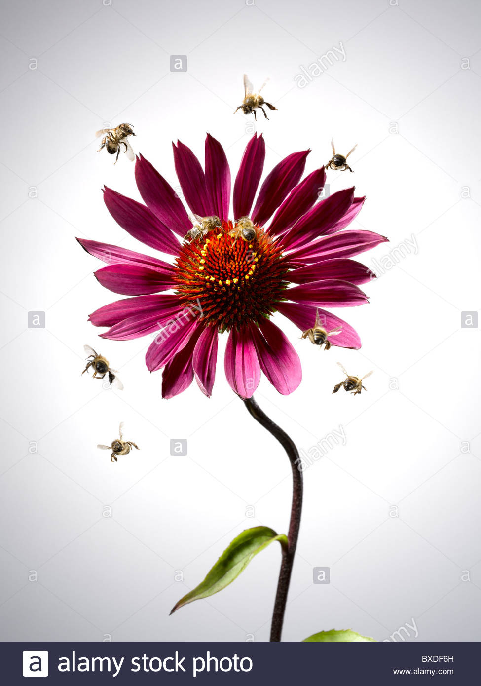 Bees flying around blooming flower Stock Photo: 33488745 - Alamy