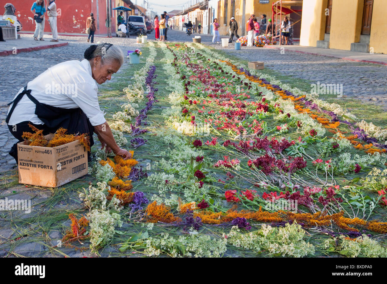 Antigua, Guatemala. Woman putting finishing touches on a carpet of flowers, pine needles, and other traditional - Stock Image