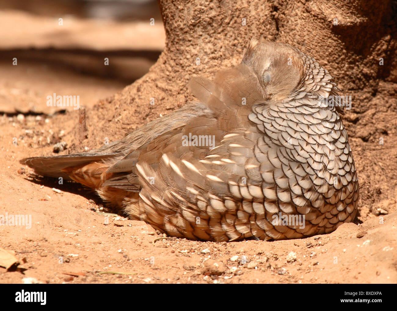 Cute Quail Stock Photos & Cute Quail Stock Images - Alamy