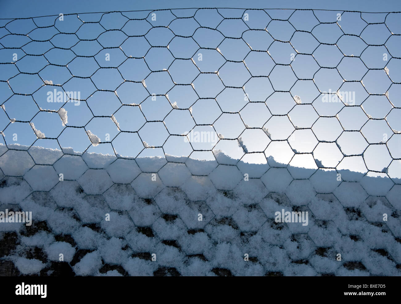Chicken Mesh Stock Photos & Chicken Mesh Stock Images - Alamy