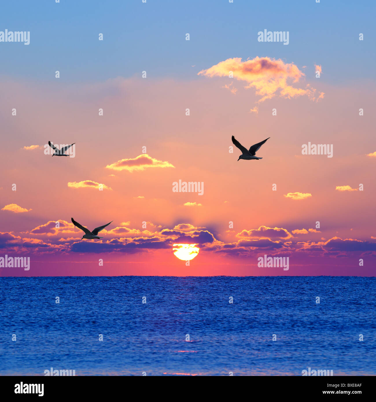 Red rising sun above the dark blue sea with seagulls - Stock Image