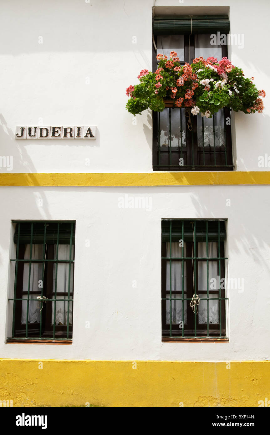 Geraniums growing in a window box on the front of a house with three windows, Santa Cruz area of Seville, Spain - Stock Image