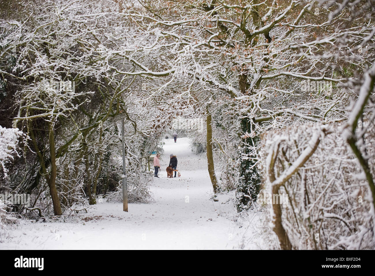 A pathway covered in snow in Essex - Stock Image