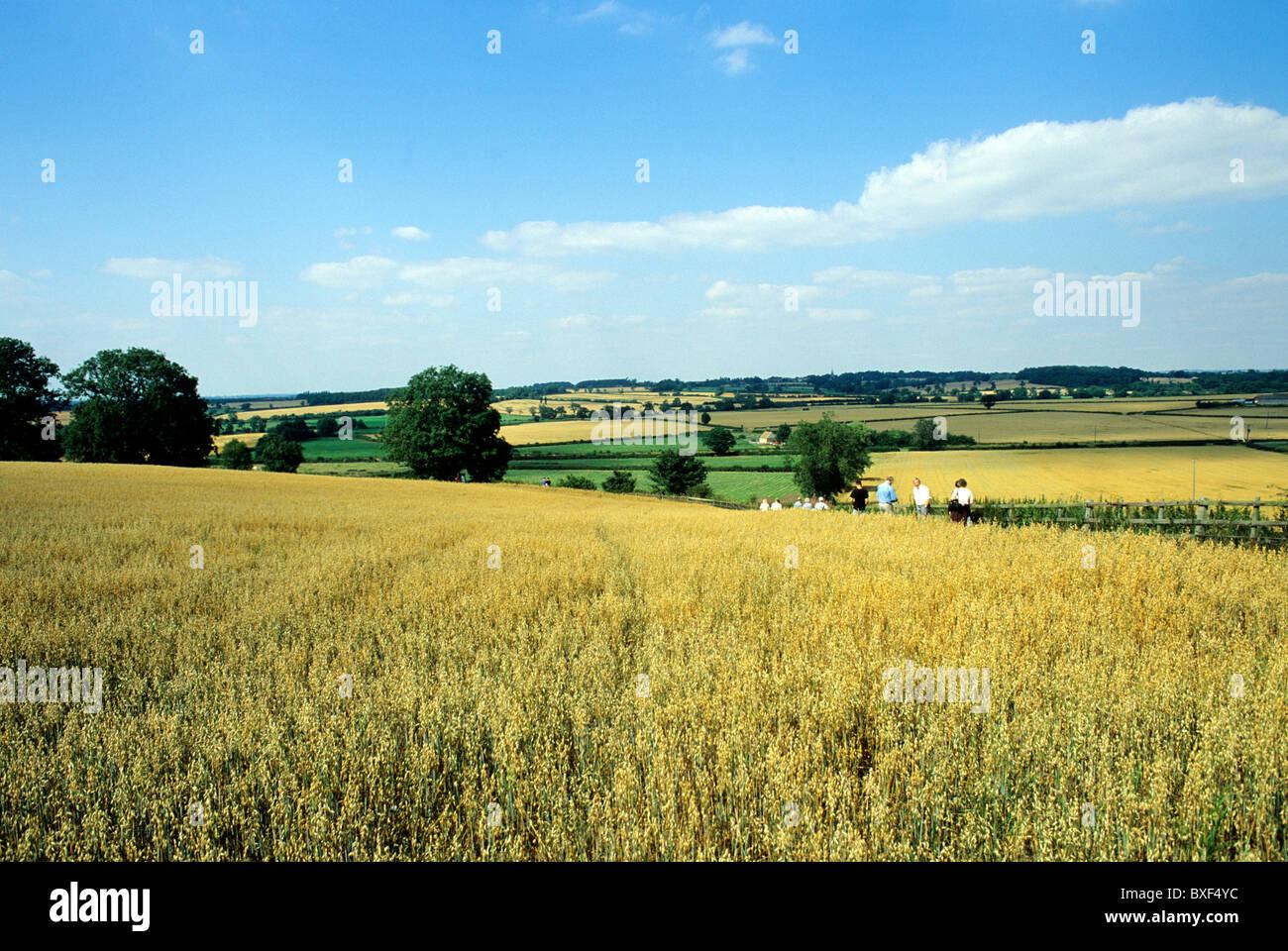 Bosworth Battlefield Visitor Trail, Leicestershire England UK English historic battlefields battle battles - Stock Image