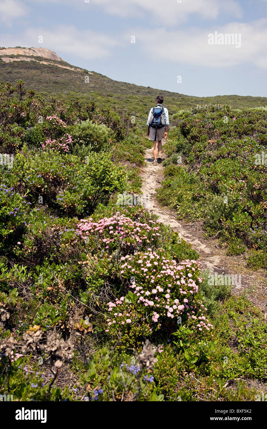 Woman walking through flowery bush landscape towards Peak Head in the Torndirrup National Park near Albany in Western - Stock Image