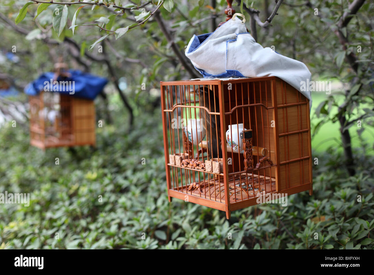 Songbird in cage. Shanghai People's Square Park, China - Stock Image
