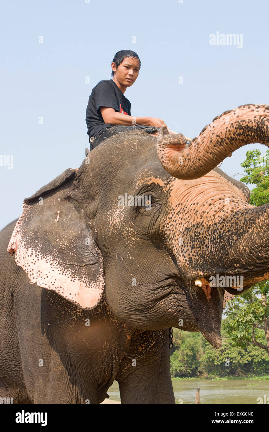 Mahout rides elephant at Elephant Stay, an elephant conservation center in Bangkok, Thailand - Stock Image