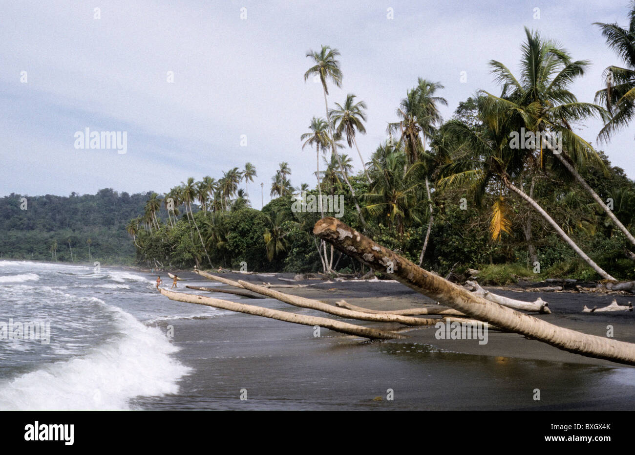Costa Rica Playa Negra Palm Trunks Towering Into Surf Of Sea Beach Black Sand