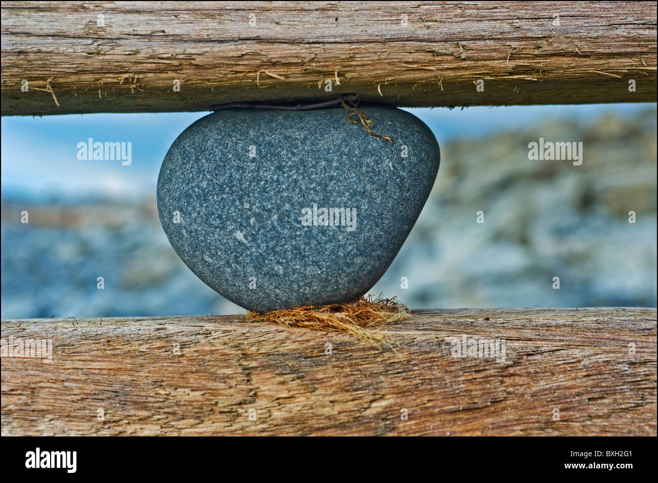 a stone stuck in a wooden sea defense on the south beach in aberaeron west wales - Stock Image