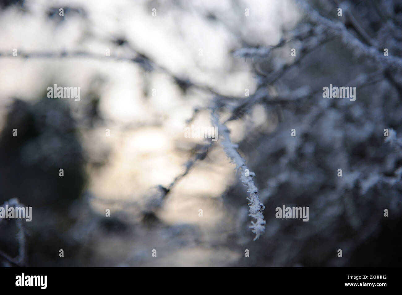 Frosty twig, late afternoon. - Stock Image
