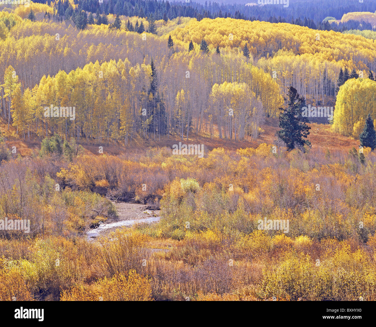 Mountain meadow and aspen groves in autumn, Kebler Pass Road west of Crested Butte, Gunnison National Forest, Colorado, Stock Photo