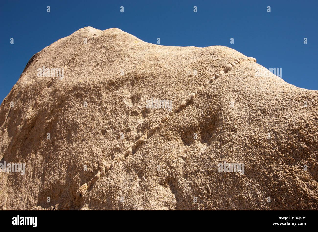 Monzogranite rock Intrusions (dikes) in a monzogranite rock, Joshua Tree National Park, California, USA. - Stock Image