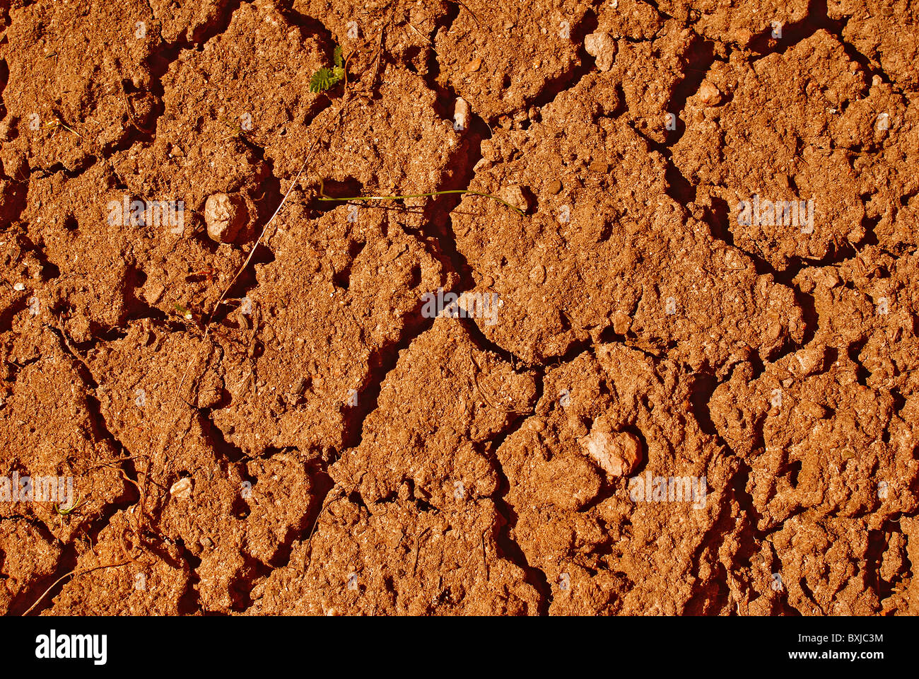 Cracked dry ground and small green sapling - Stock Image