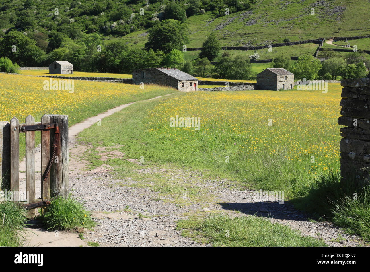 Buttercup Meadow near Muker in the Yorkshire Dales National Park - Stock Image