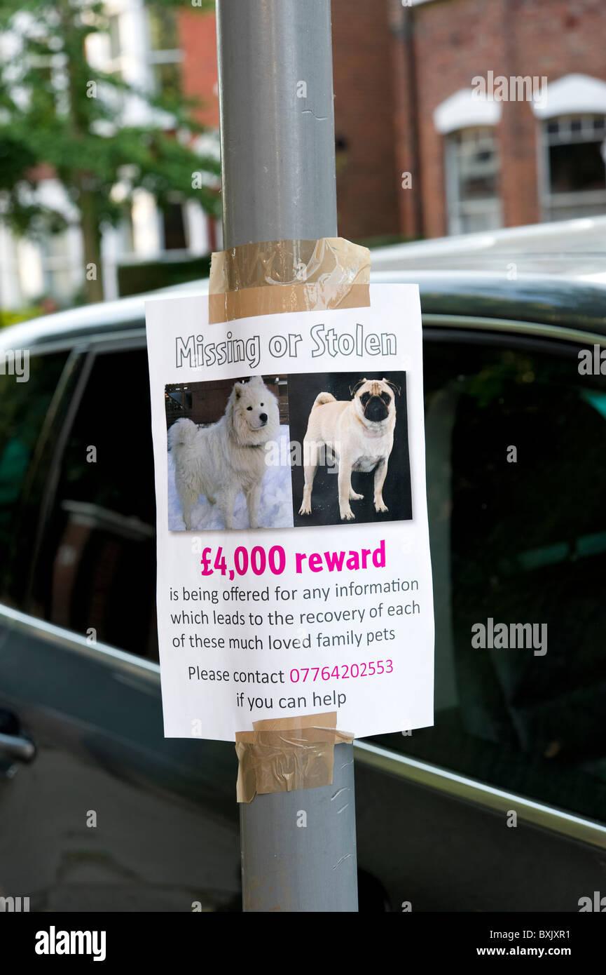 Reward offered on missing or stolen dog sign, London, England, UK - Stock Image
