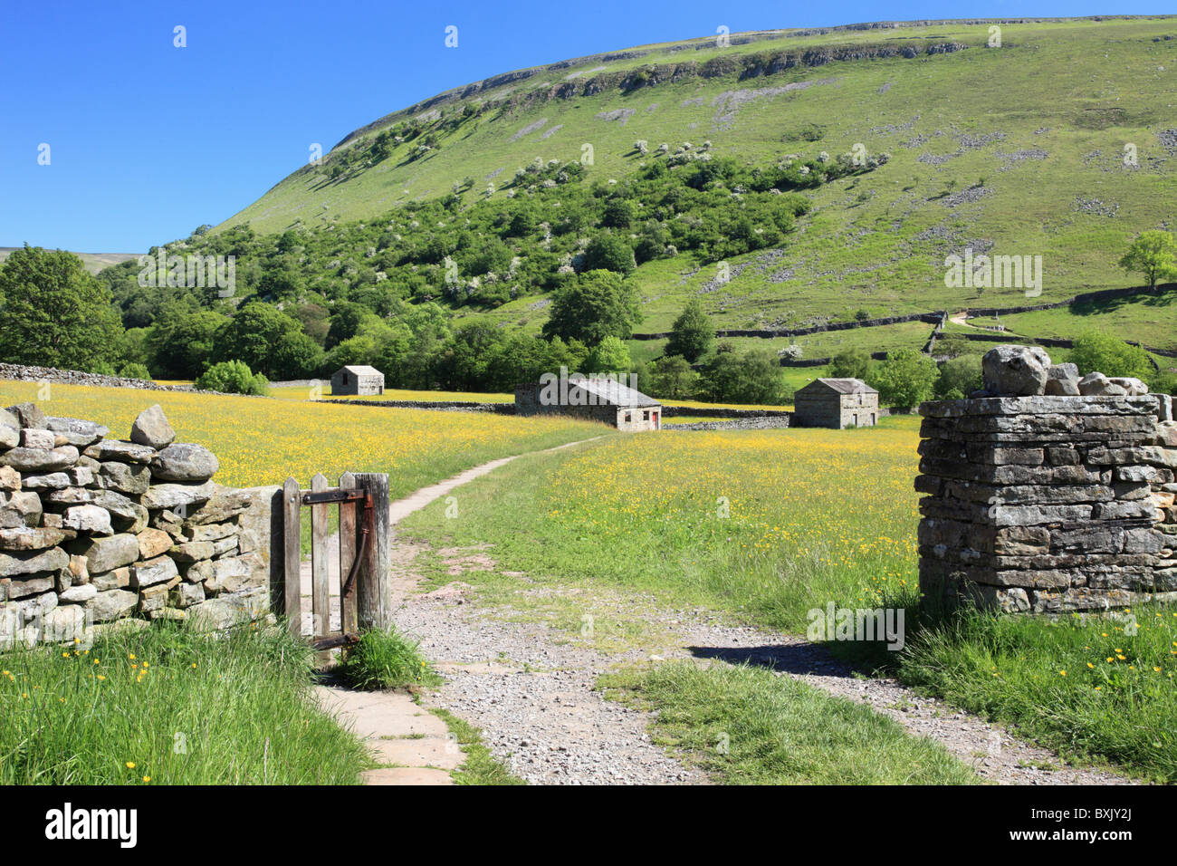 Buttercup Meadows near Muker in the Yorkshire Dales National Park - Stock Image