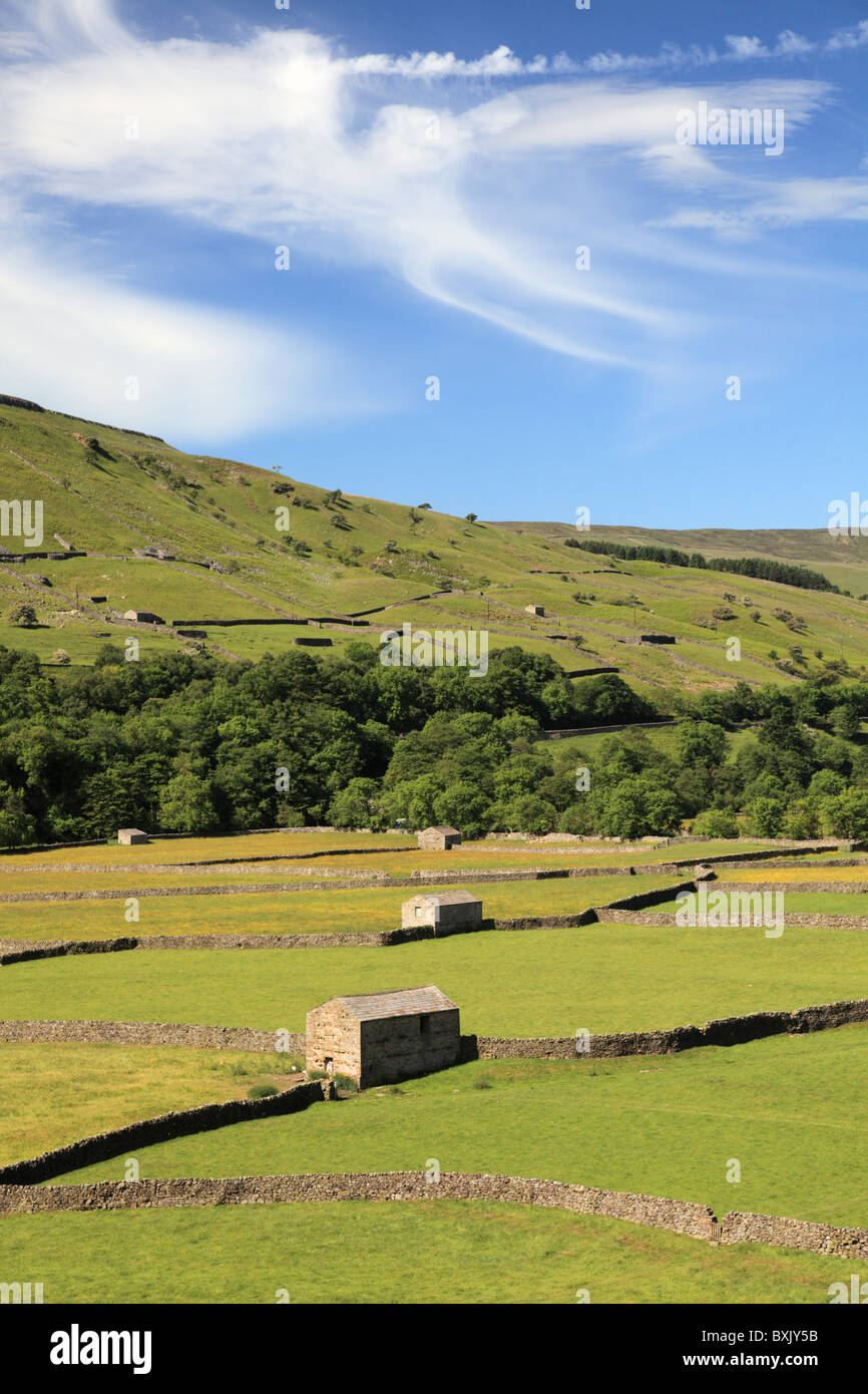 Meadows near Gunnerside in the Yorkshire Dales National Park - Stock Image