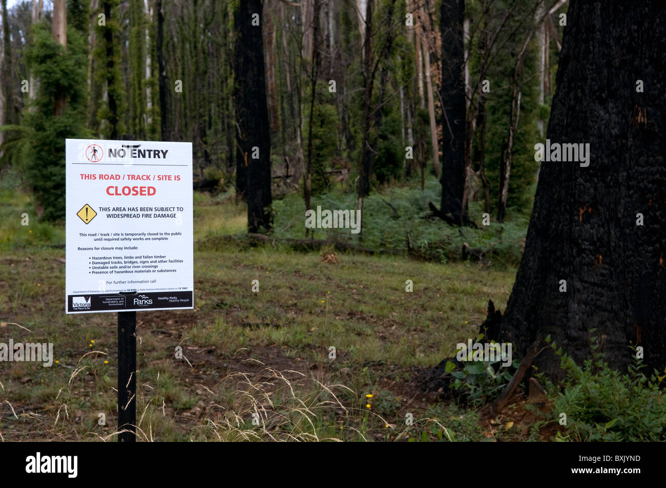 No Entry sign closing off walking track and fire damaged trees and bush showing regrowth a year after a bushfire - Stock Image