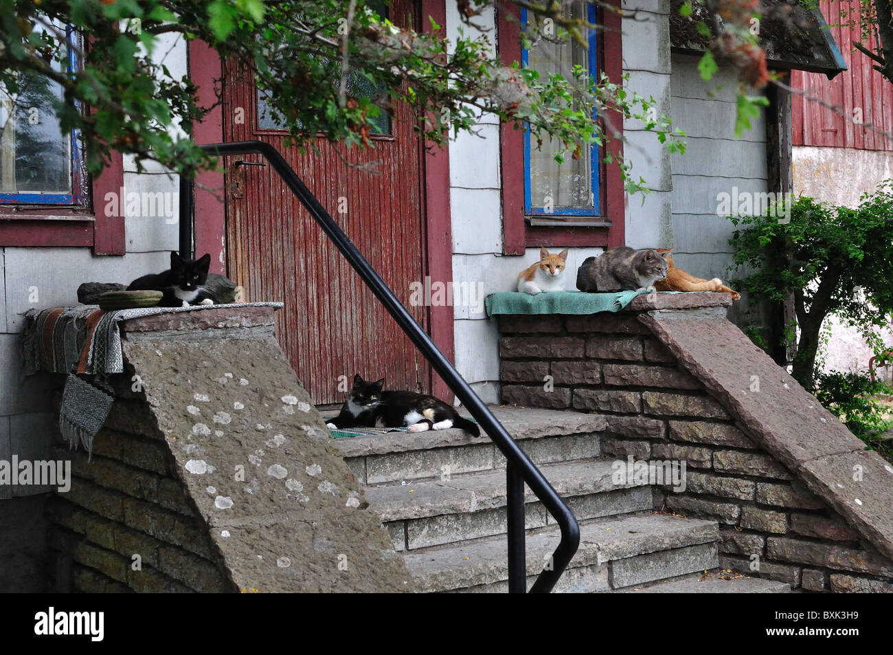 Several cats laying around an entrance to a old house. - Stock Image
