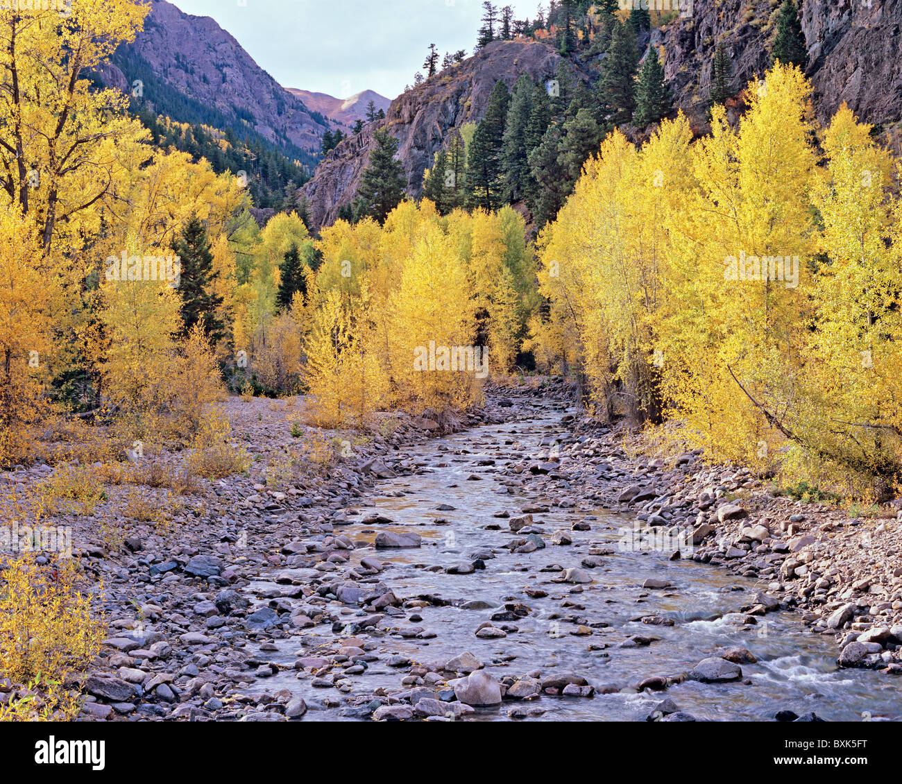 Cottonwood Creek with golden autumn aspen along Cinnamon Pass Road, Gunnison National Forest, Colorado, USA - Stock Image
