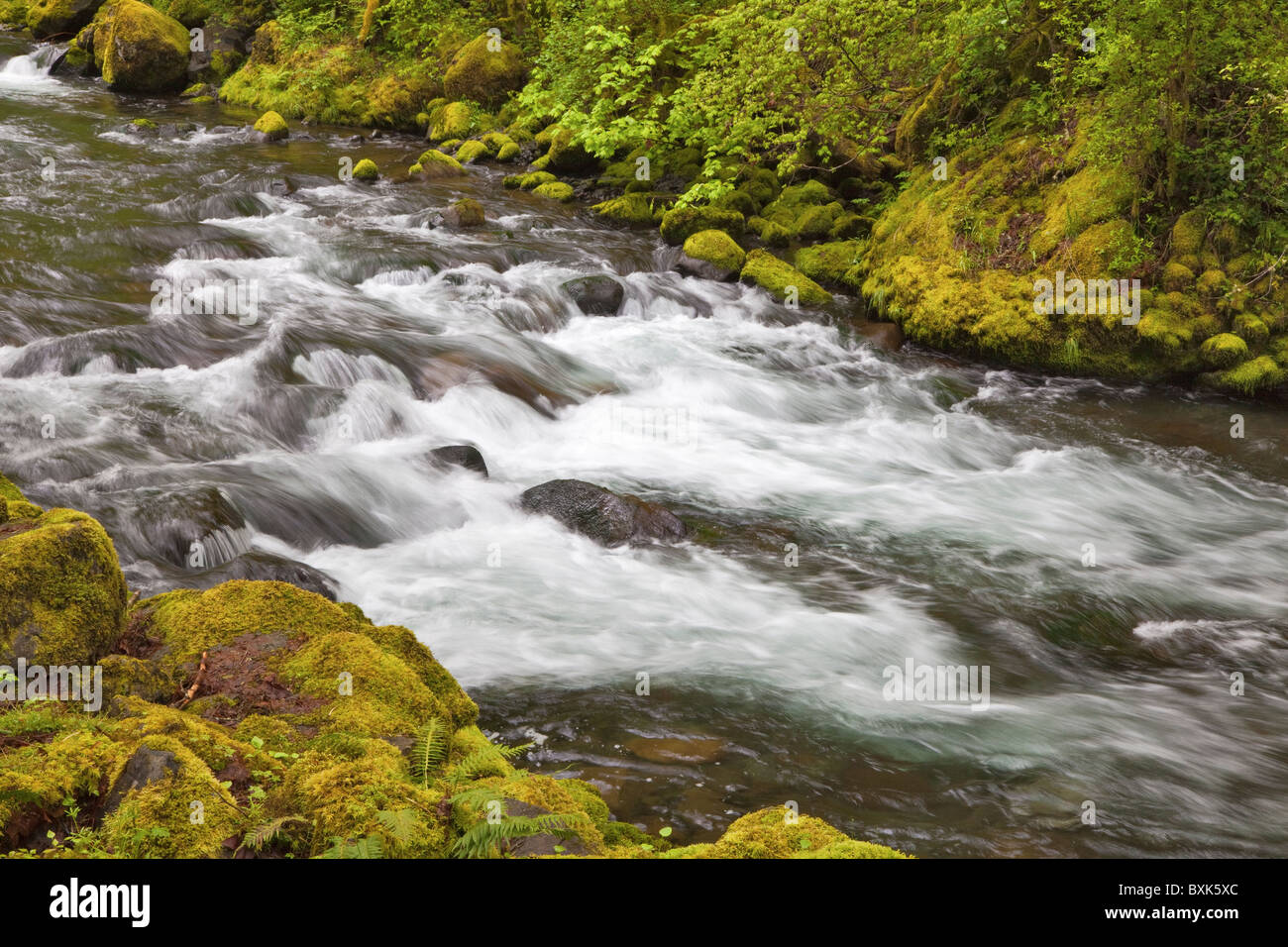 Tanner Creek, Columbia River Gorge National Scenic Area, Oregon, USA - Stock Image