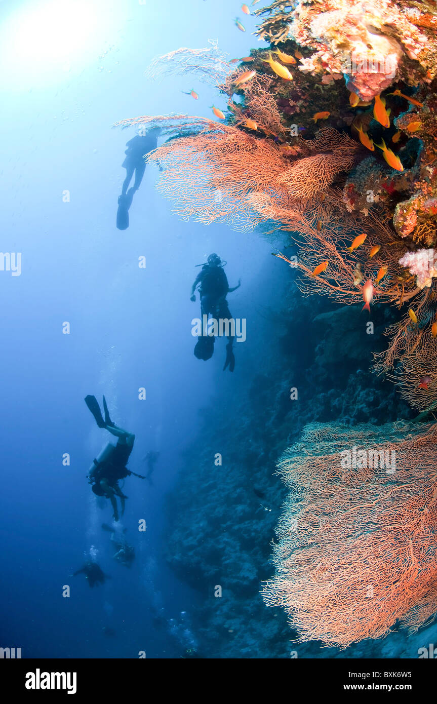 Scuba Divers pass by a coral reef photographed at Ras Mohammed National Park, Red Sea, Sinai, Egypt, - Stock Image