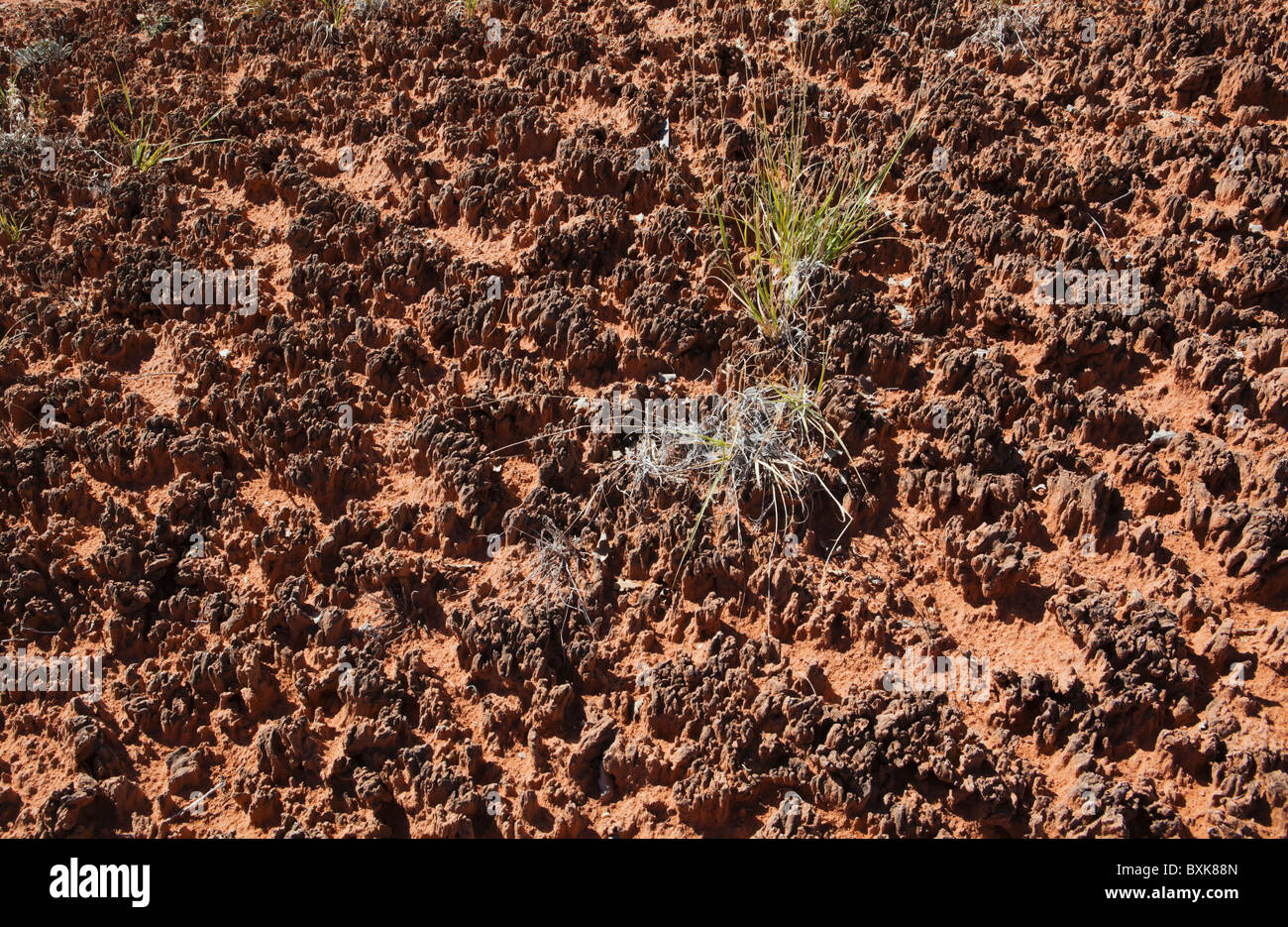 Closeup of cryptobiotic soil in Canyonlands National Park, Needles District, Utah, USA. - Stock Image