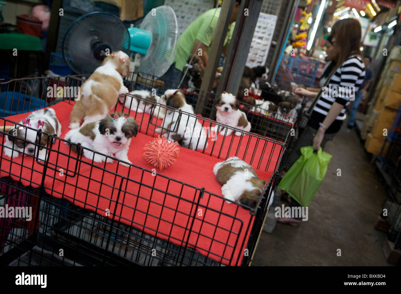 Dogs for sale at Chatuchak Weekend Market - Stock Image