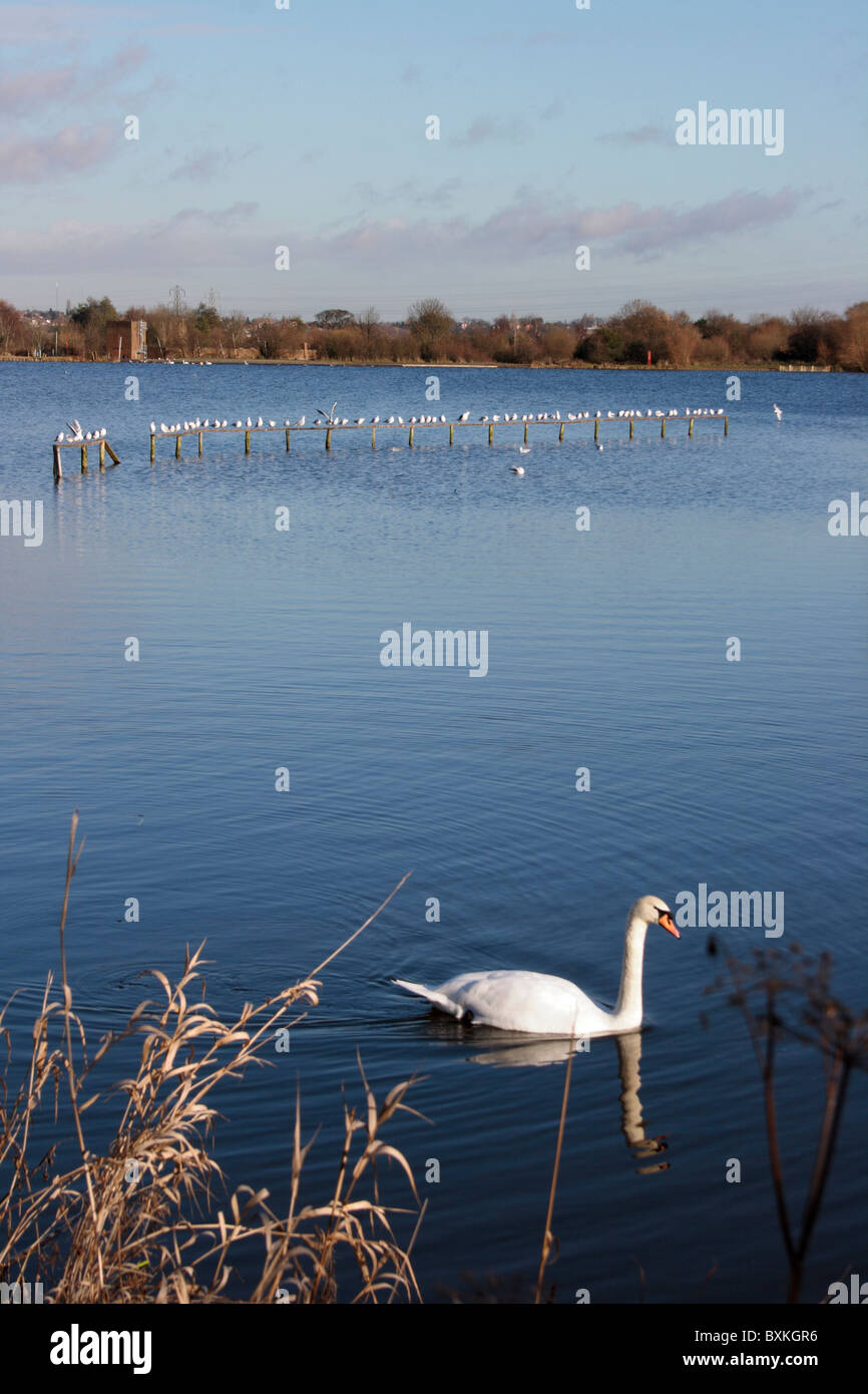 Sandwell Valley Park - Stock Image