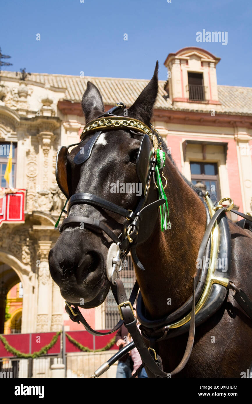 Carriage horse waits for tourists /  profile head. In front of The Archbishop 's Palace; Plaza del Triunfo. - Stock Image