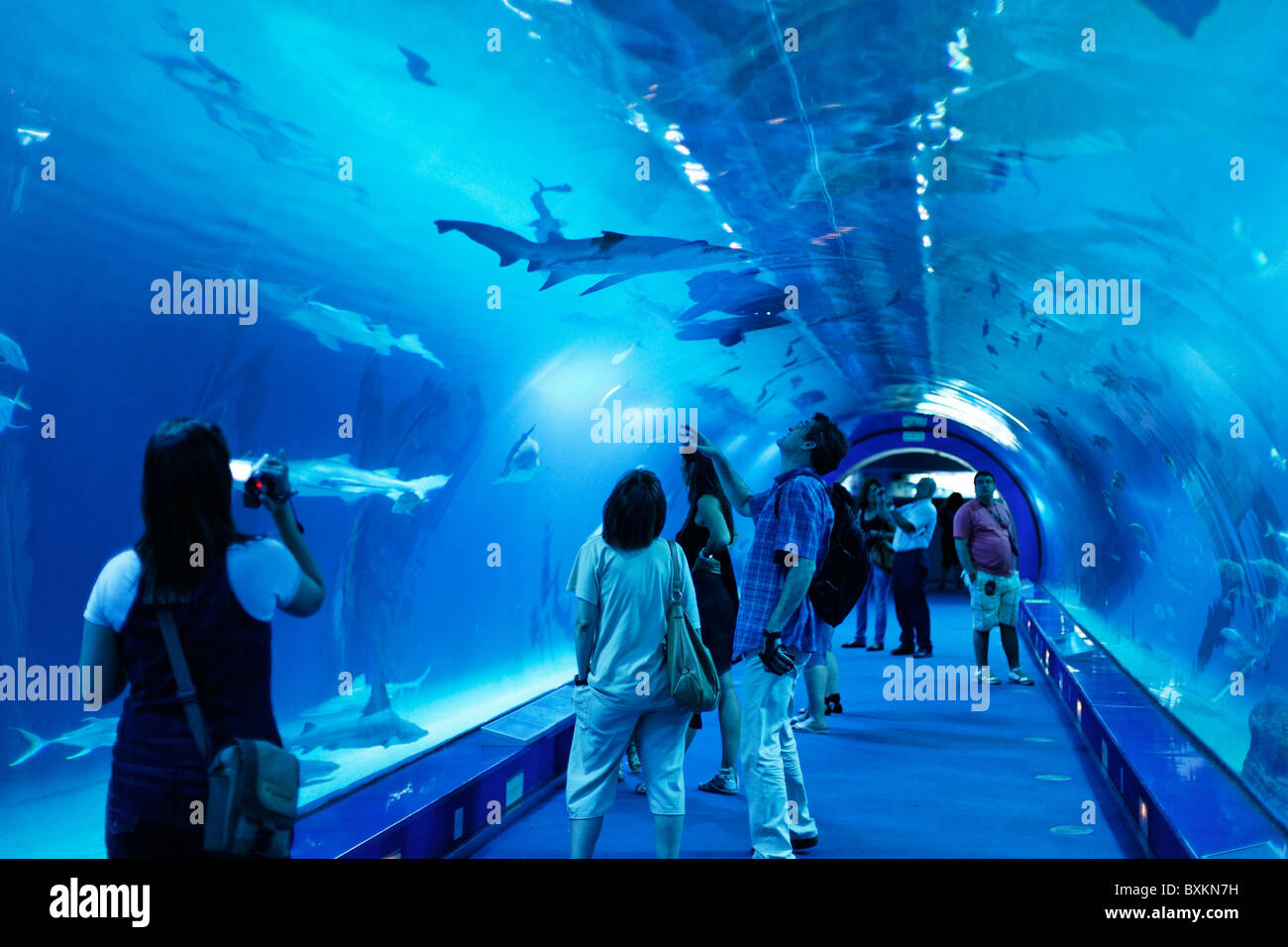 Shark Tank L 39 Oceanografic The Largest Aquarium In Europe