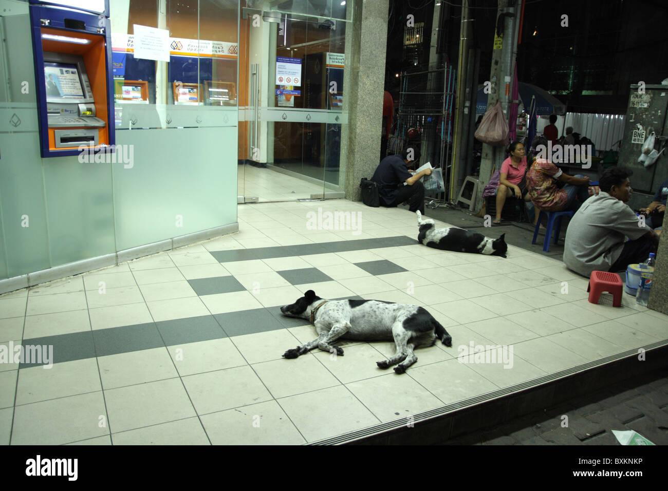 Dogs sleeping on the street , Bangkok - Stock Image