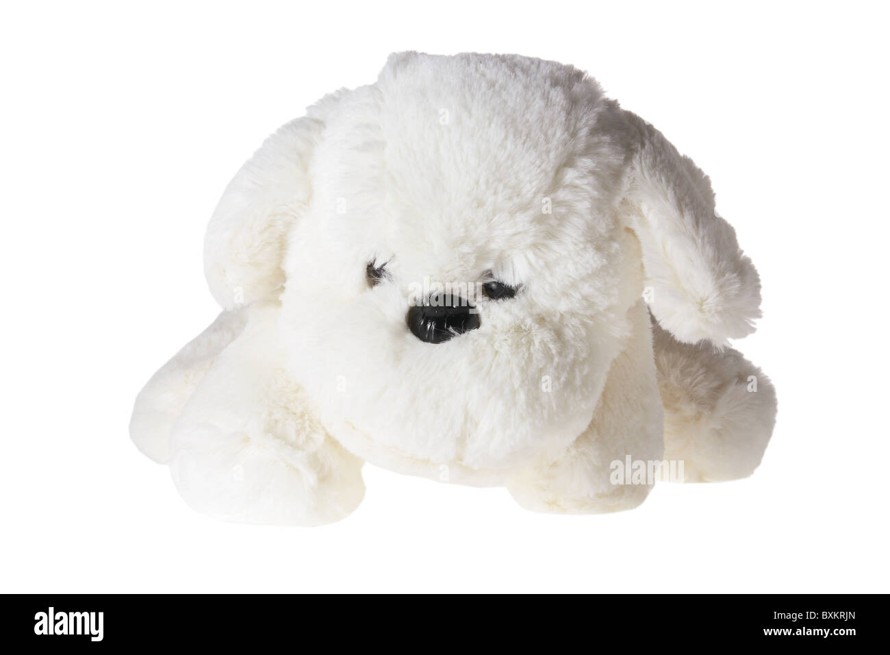 Soft Toy Puppy - Stock Image