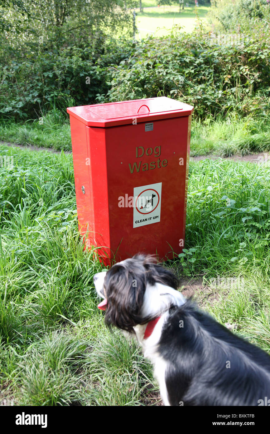 A dog next to a bin to collect dog waste - Stock Image