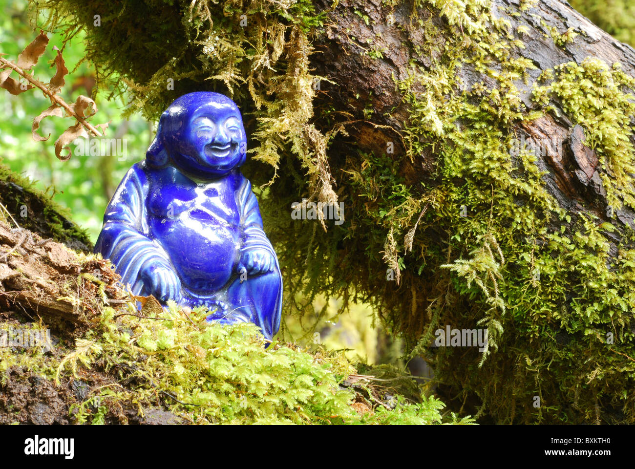 Blue porcelain Buddha statue nestled in mossy tree limbs Stock Photo