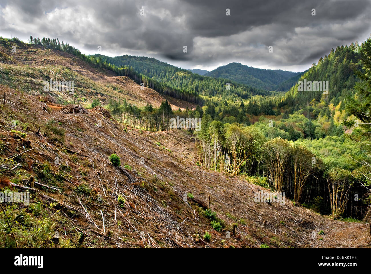 Clear cut logging operations in stormy Oregon mountain valley Stock Photo