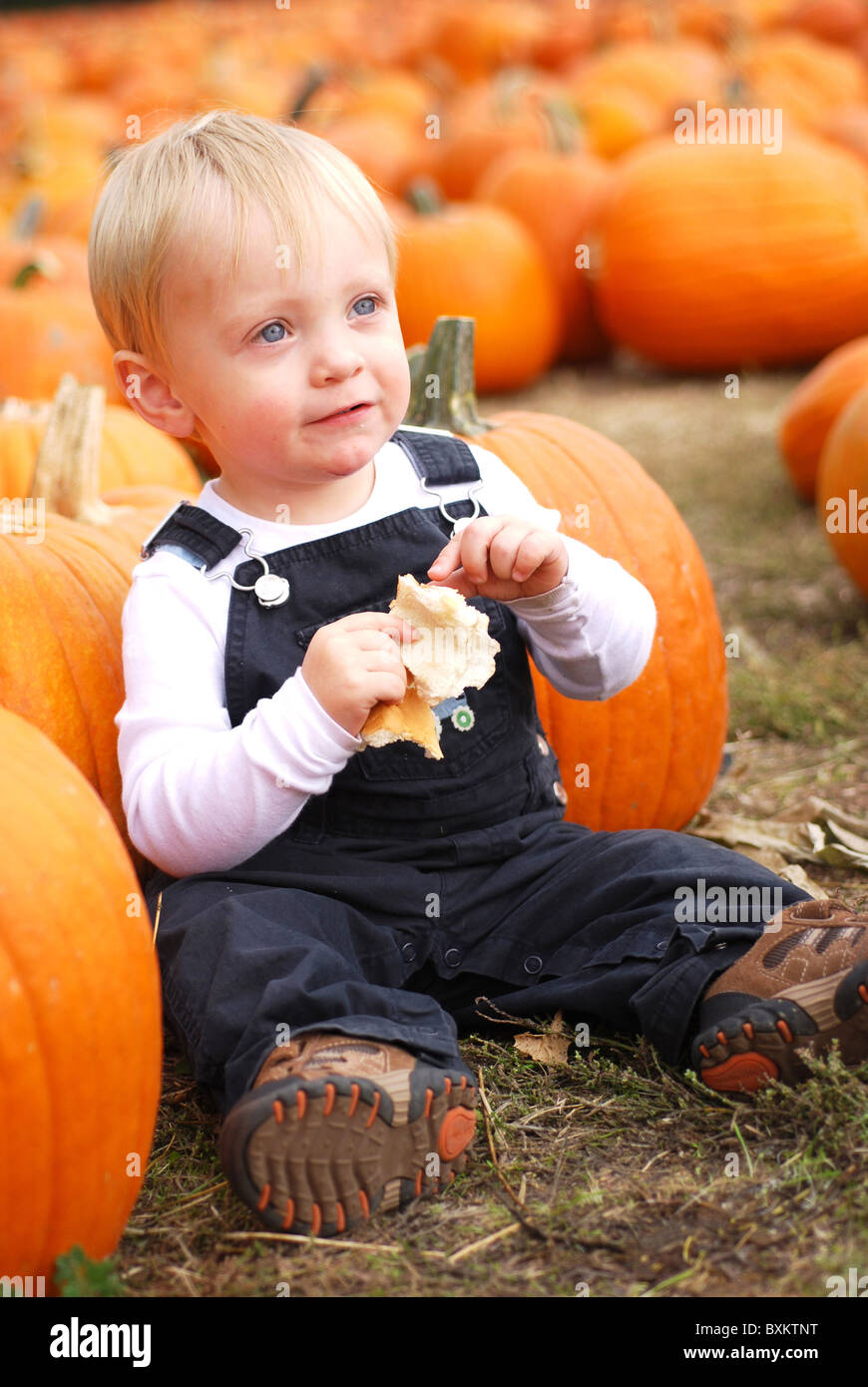 Young boy at a pumpkin farm Stock Photo